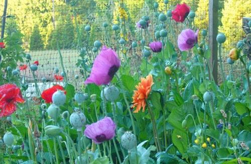 Picking-Garden-e1423764298100