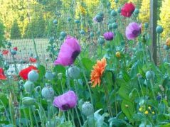 garden of various types of flowers