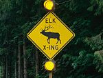 Elk crossing sign