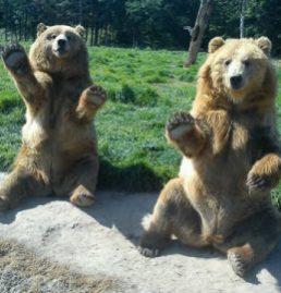2 bears sitting