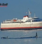 Black Ball boat with whale in foreground
