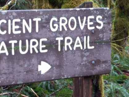 Ancient Groves Nature Trail is the northern part of the Hoh Rainforest