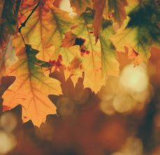 Fall leaves of various colors